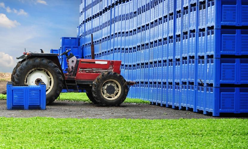 Skrzyniopalety plastikowe - idealne rozwiązanie do transportu produktów spożywczych